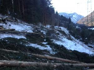 Ausholzung_Freileitung_0398