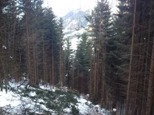 Ausholzung_Freileitung_0399